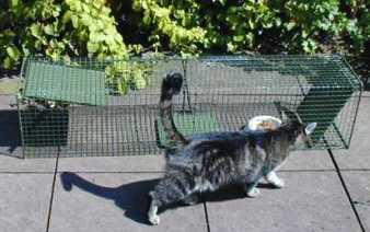 verwilderte katzen einfangen