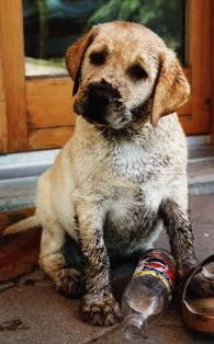 kalte ohren bei hunden