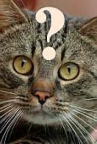 sagt der igel zu der katze